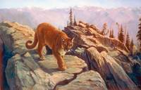 Cougar - Mountain Dweller