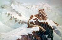 Snow Leopard - Spirit of the Mountains