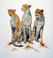 Cheetahs - The Three Graces