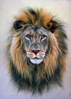Head Study of a Lion