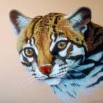 """Ocelot Wild Cat Study"" by ArtLoversOnline"