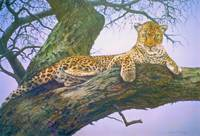 Lazy Day Leopard
