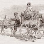 """Children on a wagon pulled by a mule"" by CBimages"