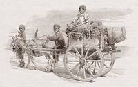 Children on a wagon pulled by a mule