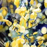 """""""Lightness of Bee-ing"""" by JamesKnowles"""
