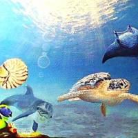 Ocean of light Art Prints & Posters by Alan Minshull