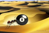 Eight-ball Ant