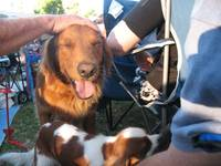 Cute Dogs at Concert in the Park