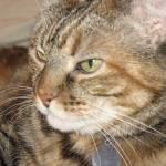 """Cinnamon Cat"" by DonnaGrayson"
