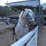 """""""Horse at Griffith Park"""" by DonnaGrayson"""