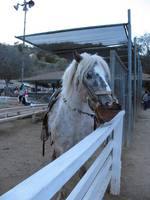 Horse at Griffith Park