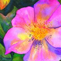 Shrub Rose Art Prints & Posters by Marie Angeli