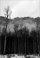 Low Mountain Clouds and Trees