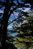 Seascape through Treeline, Big Sur, California