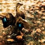 """""""The Beauty of Wings"""" by singularscenes"""