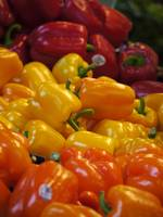 Tri-Colored Bell Peppers