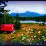 """The farm"" by CalamityJan08"