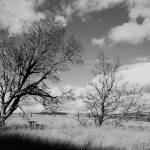 """Trees on Hood River trail"" by KimSuwak"