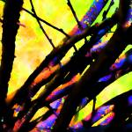 """Willows  0631-4 Abstract Edition"" by BarbaraLin"