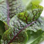 """Red Sorrel with title, Heidi Brandt"" by GypsyChicksPhotography"