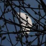 """""""Half Moon"""" by diavolo_felice"""