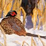 """""Nebraska Pheasant"""" by artdehigby"