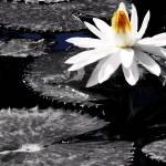 """Water Garden II"" by Cynthia_Burkhardt"