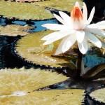 """Water Garden"" by Cynthia_Burkhardt"