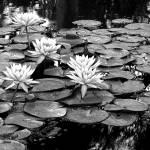 """Botanical Garden III"" by Cynthia_Burkhardt"