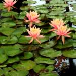 """Botanical Garden II"" by Cynthia_Burkhardt"