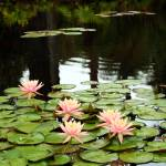 """Botanical Garden I"" by Cynthia_Burkhardt"