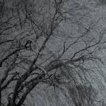 """Weeping Tree"" by markwuttke"