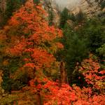 """Red Fall Color and Fog in Oak Creek Canyon"" by gmeyerle"