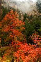 Red Fall Color and Fog in Oak Creek Canyon
