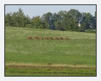 Wellsboro Pennsylvania Hay Hedgerow Landscape