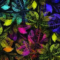 Blacklight Jungle