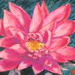 """Pink Lotus"" by AbbieGroves"