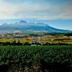 """Vineyard in Stellenbosch, South Africa"" by dbhalbur"