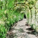 """""""Arbour"""" by AnnG"""