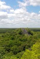 Calakmul Temple in Trees
