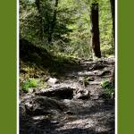 """The Path Less Traveled"" by imagesbykelly"