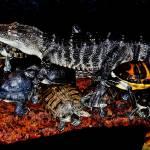 """Reptilian Pigpile"" by bavosiphotoart"