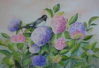 Willy Wagtail with Hydrangeas