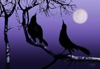 Two Crows Crowing