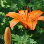 """Orange Float"" by photo_witt"