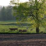 """Spring Pasture"" by Dullinger"
