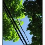 """Tree Canopy and Tele Wires"" by CuriousEye"