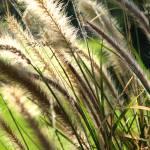 """""""Wild Grasses in RMNP"""" by Scenic_Lens"""