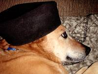 Sadie Sporting Hat