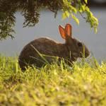 """""""Dawn Bunny"""" by photo_witt"""